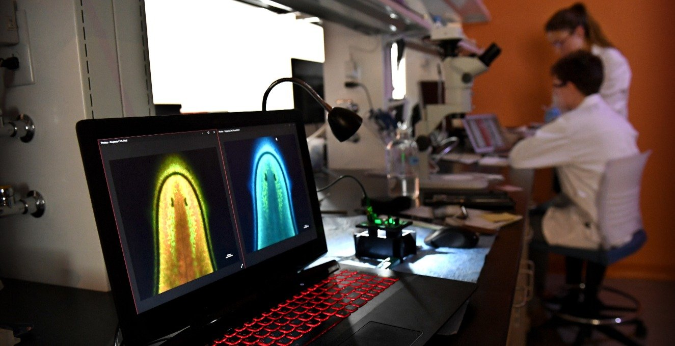 Research graphics on a monitor in a lab